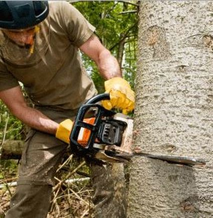 Tree Lopper in North Lakes Area Using Chain saw
