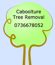 Caboolture tree removal zillmere