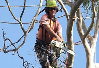 Tree Lopping Brisbane Northside