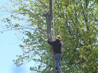 dead tree removal in petrie
