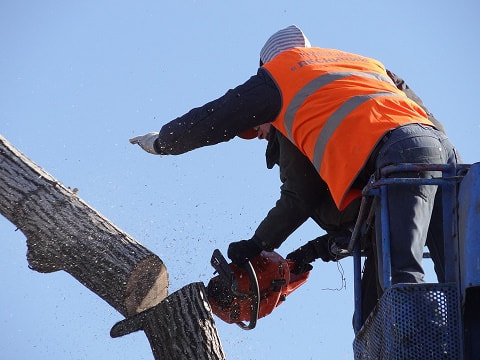 tree removal Rothwell Area