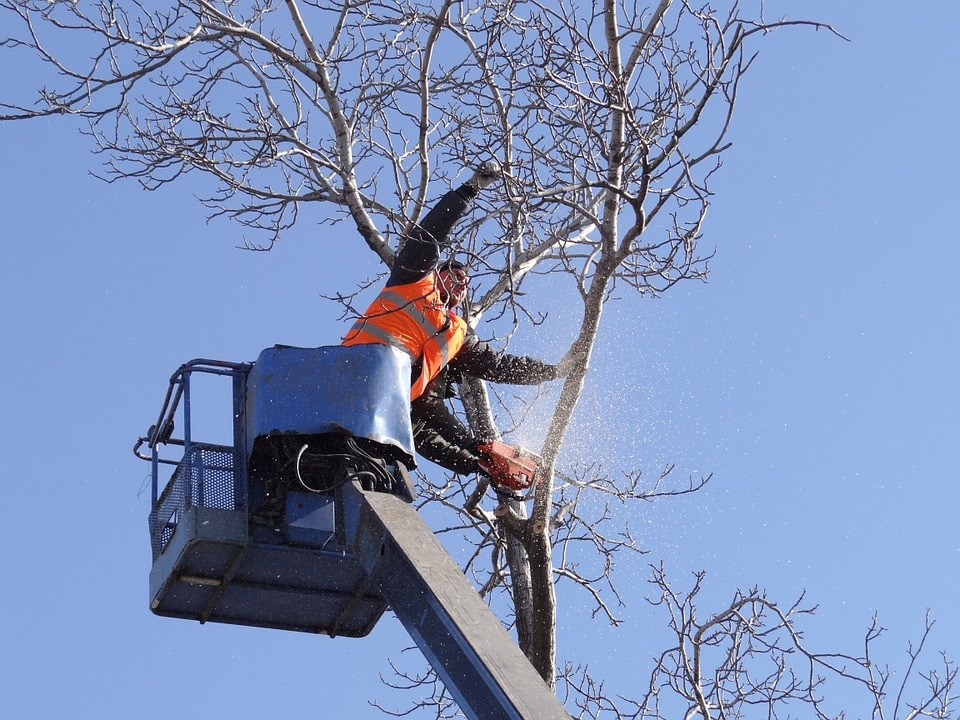 tree removal Murrumba Downs Area