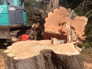 Tree Removal North Brisbane